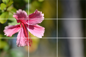 Rules of Composition in Photography